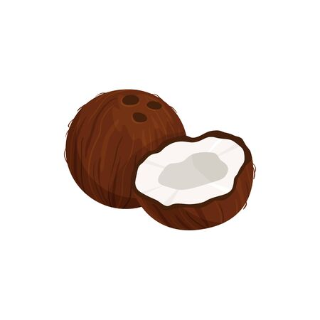 Tropical coconut isolated whole and cut fruit sketch. Vector exotic palm tree nut, oil and milk ingredient