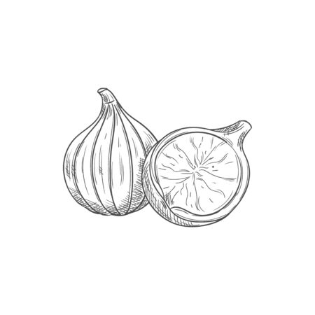 Common fig fruit isolated sketch. Vector tropical common fig whole and half Фото со стока - 136682690