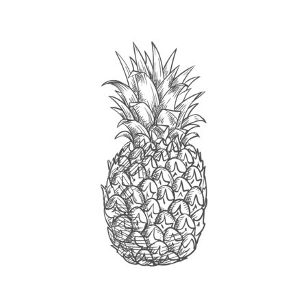 Exotic pineapple isolated tropical whole fruit sketch. Vector ananas with green leaves, vegetarian food dessert Ilustração