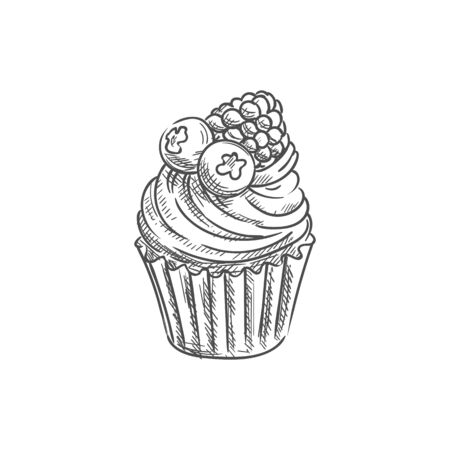 Cupcake, muffin with fruits and berries isolated sketch. Vector cake with blueberry and raspberry 일러스트