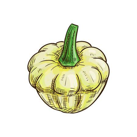 Pattypan squash isolated patty pan vegetable sketch. Vector vegetarian food, white pattypan