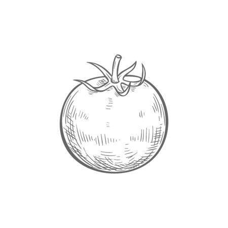 Tomato isolated sketch icon. Vector berry vegetable, cherry tomato with leaf