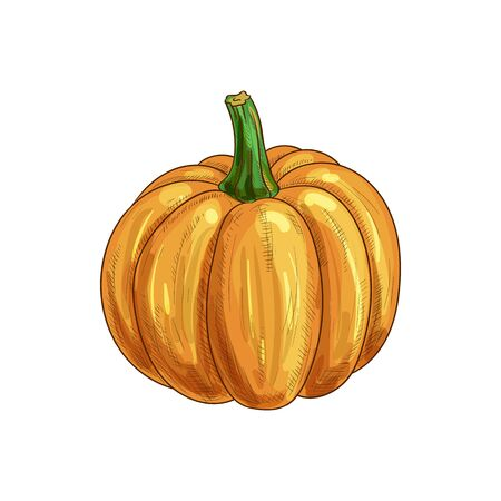 Ripe pumpkin with stem isolated autumn vegetable. Vector ripe gourd, orange squash  イラスト・ベクター素材