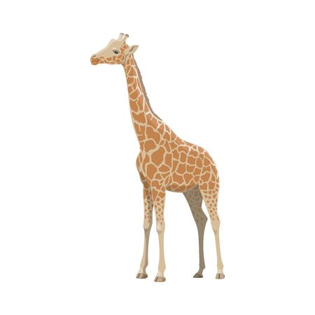 Giraffe wild animal vector isolated icon. African safari zoo and savanna hunt trophy giraffe