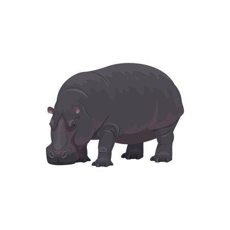 Hippopotamus wild animal vector isolated icon. African safari zoo and savanna hunt trophy hippopotamus 向量圖像