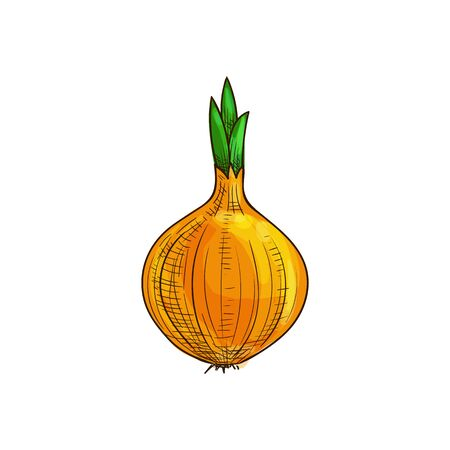 Whole onion bulb, vegetable root isolated sketch. Vector raw unpeeled veggie with green leaves Imagens - 137233815