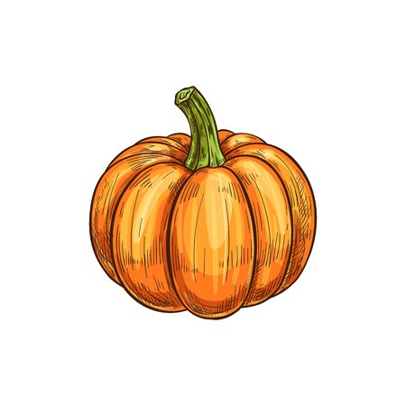 Ripe pumpkin with stem isolated autumn vegetable. Vector ripe gourd, orange squash  イラスト・ベクター素材