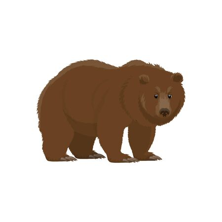 Bear wild animal vector icon. Isolated zoo mammal and hunt trophy grizzly or brown bear Illustration