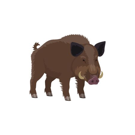 Boar wild animal vecor isolated icon. Zoo predatory mammal and hunt trophy aper hog