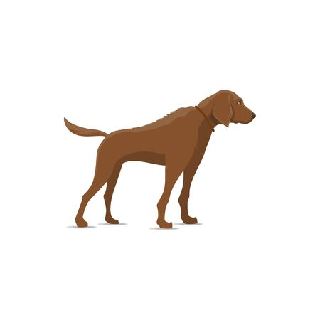 Hunting dog vector isolated icon. Hunter gun or bird dog, waterfowl hunt animal