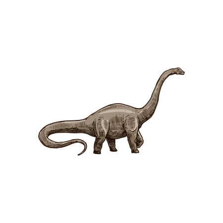 Sauropod dinosaur isolated Brachiosaurus sketch. Vector Camarasaurus, prehistoric extinct animal
