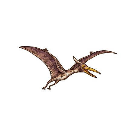 Pterodactyl isolated flying pteranodon dinosaur bird sketch. Vector prehistoric pterosaur dino animal Ilustração