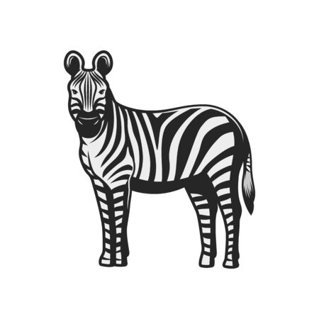 Zebra wild animal icon. Vector African zebra, safari hunt and zoo mammal