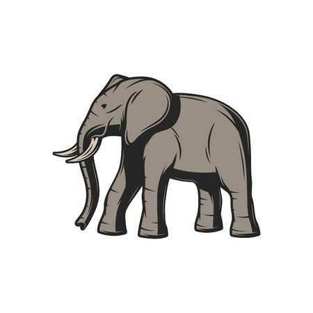 Elephant wild animal icon. Vector African or Indian elephant, safari hunt and zoo mammal