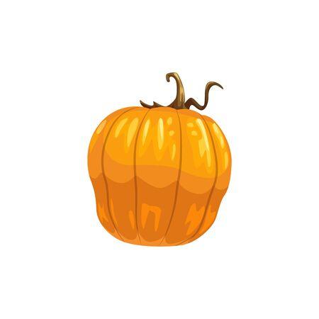 Pumpkin or squash isolated vegetable. Vector orange autumn gourd, Thanksgiving or Halloween mascot