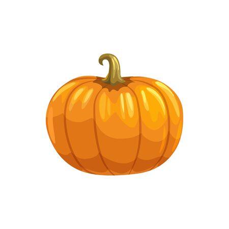 Ripe autumn pumpkin isolated organic vegetable. Vector vegetarian food, Halloween symbol
