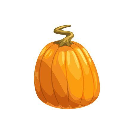 Pumpkin ripe gourd, fall harvest vegetable. Vector squash with stem, autumn food