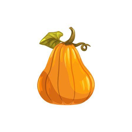 Pumpkin with stem isolated gourd vegetarian food. Vector autumn gourd, Halloween symbol