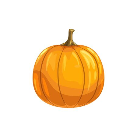 Healthy squash isolated vegetarian pumpkin with stem. Vector organic food, realistic gourd