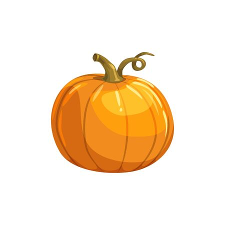 Pumpkin with curved stem isolated vegetarian food. Vector organic squash gourd, autumn vegetable  イラスト・ベクター素材