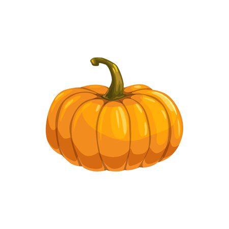 Gourd vegetarian food isolated squash. Vector orange pumpkin with stem, fall harvest