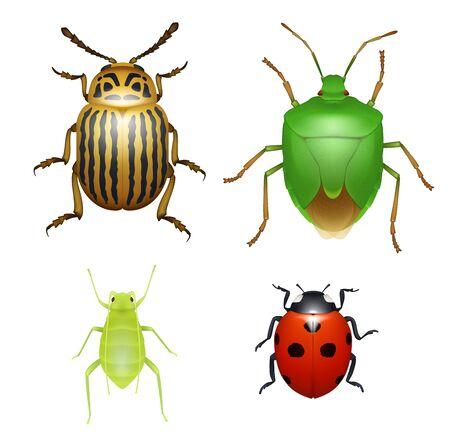 Mariquita y escarabajo de Colorado, pulgón de la madera e insecto de escudo verde, especies de plagas agrícolas. Bichos y escarabajos, animales insectos aislados vectoriales realistas Ilustración de vector