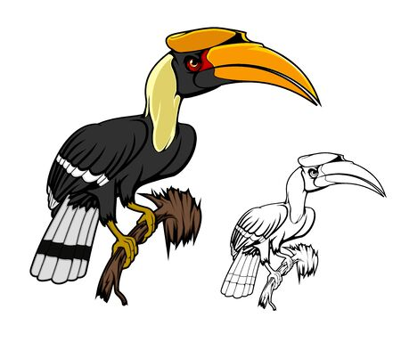 Rhinoceros hornbill bird sitting on branch. Kalao bird animal of tropical and mountain rain forests with large yellow beak, black white plumage on tail and wings