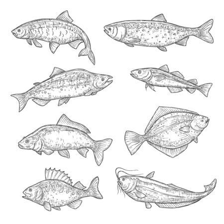 Vektorskizzen von Meer- und Ozeanfischtieren. Lachs, Thunfisch und Barsch, Karpfen, Forelle und Flunder, Welse, Navaga und Hering isolierte Fischskizze, Sport- oder Fischmarktthema