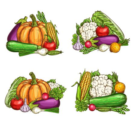 Vegetables, healthy vegetarian food, farm vector veggies. Natural broccoli eggplant, corn and cauliflower, chinese cabbage, pumpkin and garlic, tomato and pea, onion and radish, asparagus and zucchini 向量圖像