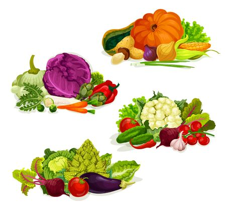 Vegetables and farm market veggies, salads and cabbages food. Vector organic vegetarian pumpkin, garlic or onion an eggplant, turnip and beet or radish, pepper and carrot, tomato and zucchini squash Illustration