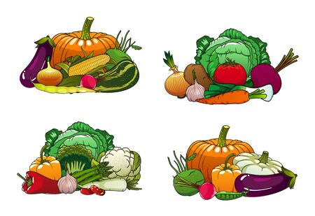 Vegetables, organic healthy farm food, carrot, green onion, tomato and beet. Vector vegetarian pumpkin, cucumber, broccoli and zucchini squash, vegan salad beetroot, radish, corn and cauliflower Imagens - 137823514