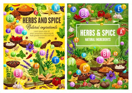Spices and herbal cooking ingredients, herbs and seasonings, condiments. Vector garlic, mint and basil, rosemary and parsley, dill and lavender, pepper, bay leaf, oregano and cinnamon herbs