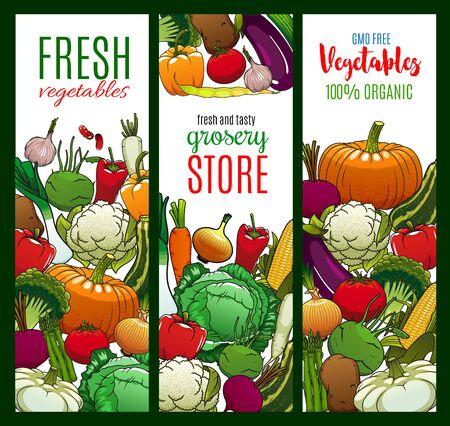 Vegetables, organic farm food veggies and GMO free cabbages. Vector carrot, green onion, tomato and corn, vegetarian pumpkin, cucumber, broccoli and zucchini squash, vegan asparagus and cauliflower