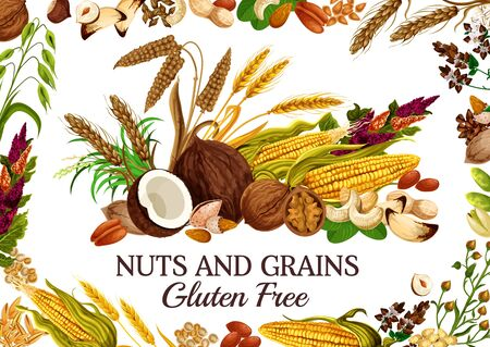 Nuts and grains gluten free natural food. Vector cereal, corn and kernels, seed snacks. Pistachio and peanut, cashew and rice, millet and rye. Almonds and buckwheat flowers, ears of wheat