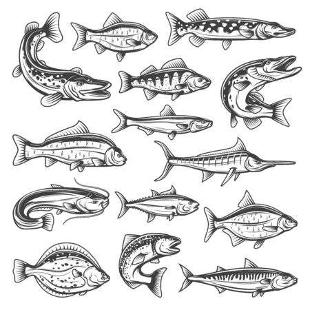 Specie di pesci vettoriali, oceano, mare e acqua dolce. Tema di pesca sportiva, luccio e salmone, tonno e marlin, orate e trota, spratto e carpa, siluro e persico, sgombro e carassio Vettoriali