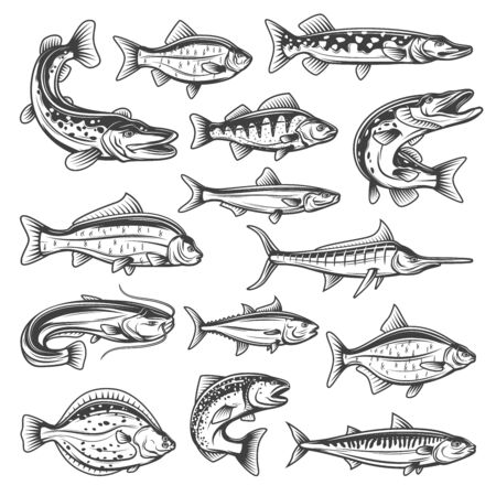 Vector fish species, ocean, sea and freshwater. Fishing sport theme, pike and salmon, tuna and marlin, bream and trout, sprat and carp, sheatfish and perch, mackerel and cruician