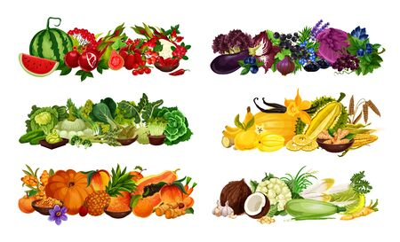 Color diet fruits, berries and vegetables sorted by red and purple, green and yellow, orange and white. Vector watermelon, salad, onion and eggplant, cabbage and banana, pumpkin and peach, corn Illustration