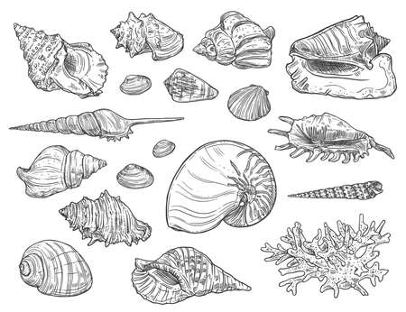 Seashells and corals. Vector isolated monochrome ocean mollusks sketches. Exotic shells, cockles and turret, scallop Illusztráció