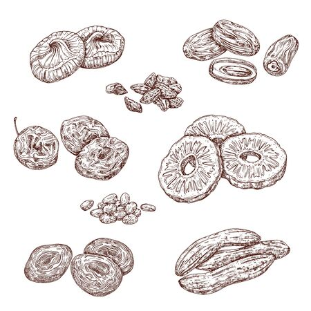 Dried fruits and candied berries isolated vector sketches. Dates, raisins and prunes, dried apricots and figs, pineapple and banana monochrome sketches