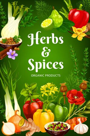 Cooking spices, seasonings and herbs vector poster. Bell pepper, garlic and rosemary, food spices poppy seeds, vanilla and horseradish, onion, basil and sage, parsley and dill, bergamot and ginger