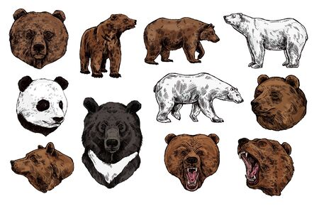 Bear vector sketch with heads of predatory animal. Wild grizzly and panda, brown, polar and Asian black bears with angry muzzles, open mouth and sharp teeth. Zoo mascot and wildlife themes Illustration