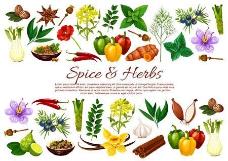 Spice and herb food seasonings vector banner with borders of vegetable and plant condiments. Chilli, mint and cinnamon, vanilla, garlic and onion, nutmeg, anise and bay leaves, saffron, turmeric, dill