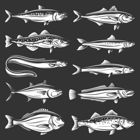 Sea fish icons of seafood animals vector design. Tuna, salmon and mackerel, marine eel, pilchard and anchovy, dorado, hake and bass, trout, cod and carp. Fishing sport and fishery monochrome symbols