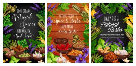Fresh herbs, spices and vegetable seasonings vector design of food condiments. Basil, mint and parsley plant green leaves, chilli peppers, cinnamon and vanilla, ginger, garlic and cardamom seeds frame Ilustracja