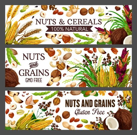 Nuts, cereals and grains of vector nuts health food banners design