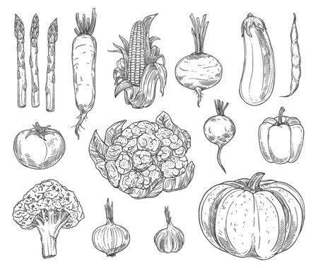 Croquis de vecteur de légumes de ferme.