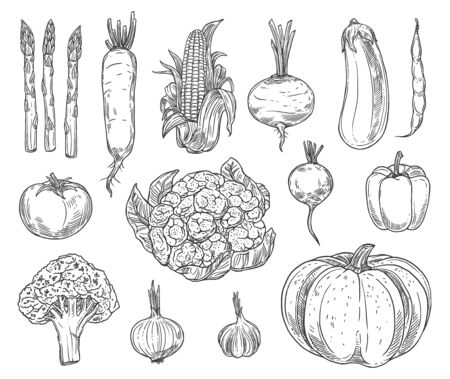Farm vegetables vector sketches.