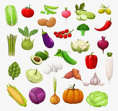 Vector vegetables and salads. Tomato, pepper and broccoli, onion and pea, cabbage and zucchini, chilli, garlic and radish, cauliflower, mushroom and pumpkin, corn, olives, eggplant and avocado Ilustración de vector