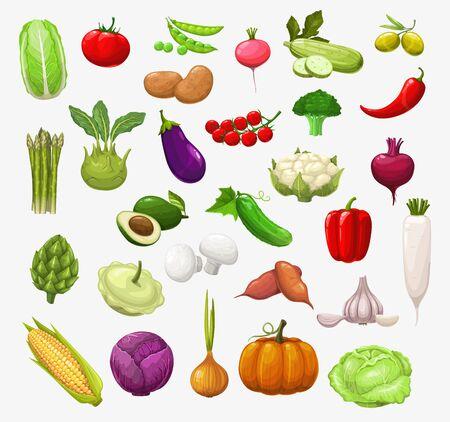 Légumes et salades de vecteur. Tomate, poivron et brocoli, oignon et pois, chou et courgette, piment, ail et radis, chou-fleur, champignon et citrouille, maïs, olives, aubergine et avocat Vecteurs