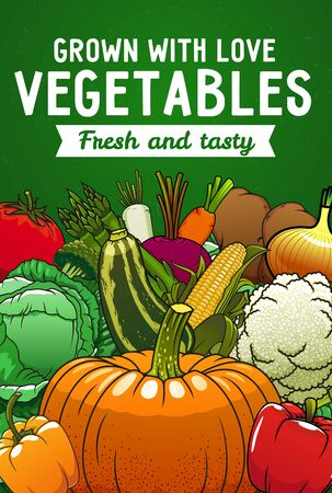 Farm vector vegetables. Carrot, bell peppers and tomato, cabbage, onion and zucchini, potato, broccoli and pumpkin, cauliflower, asparagus, beet, corn cob and radish harvest poster